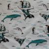 baleine orques manchots